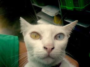 thailand cat1